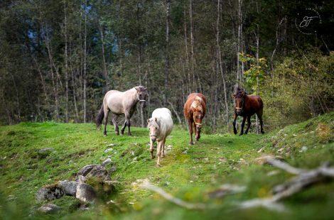 Power Power Power of the Herd..Die Kraft der Herde