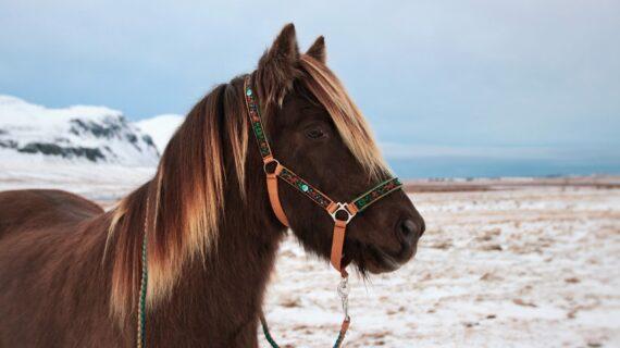 My mystery horse Kooperation
